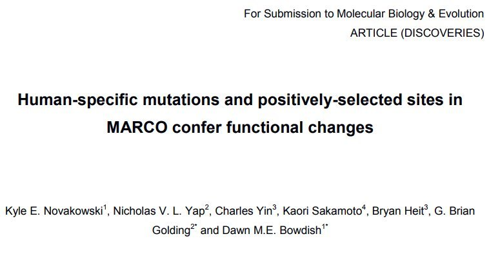Paper on  the evolution of MARCO